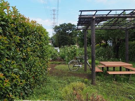 2013-08-26-1市民農園-10%.jpg