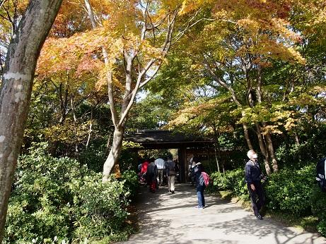 2013-11-18-1日本庭園西門-10%.jpg