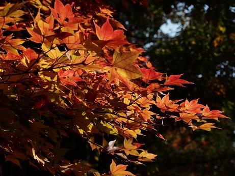 2013-11-18-3紅葉-10%.jpg