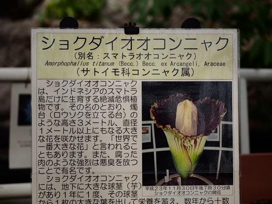 2014-02-19-15燭台大こんにゃく-1.jpg
