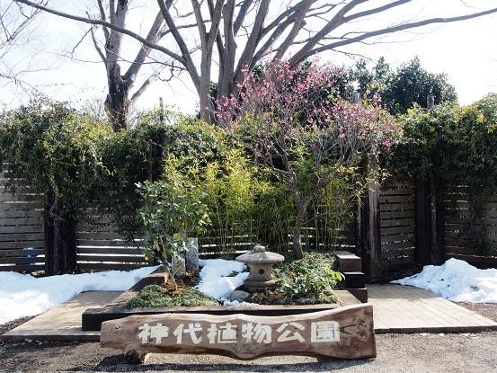 2014-02-19-2神代植物公園-2-12%.jpg