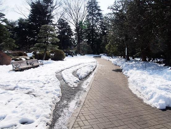2014-02-19-3神代植物公園-3-12%.jpg