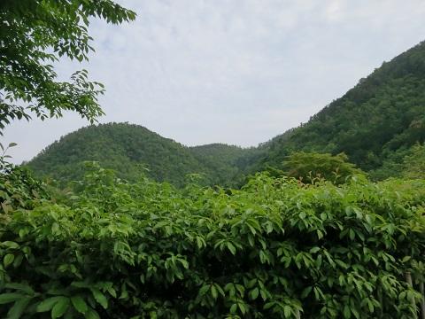 2014-05-25-26鷹峰眺望-12%.jpg
