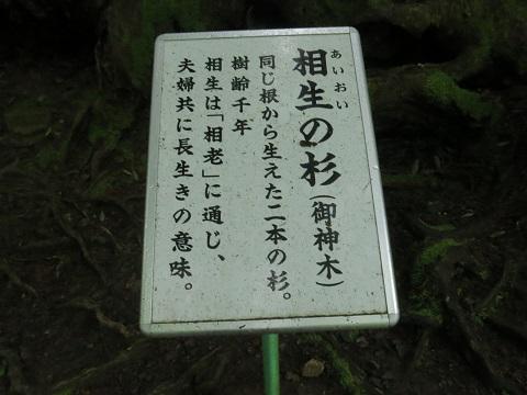 2014-05-26-14-2相生の杉-1-12%.jpg