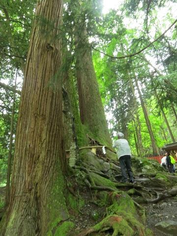 2014-05-26-15相生の大杉-2-12%.jpg