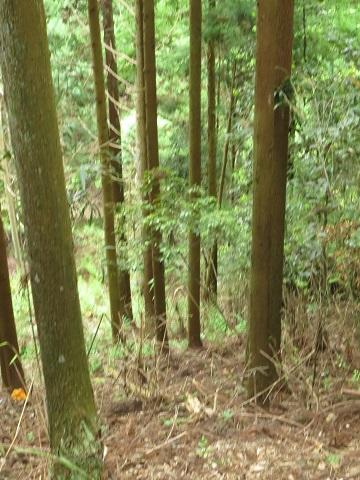 2014-05-26-53山麓-12%.jpg