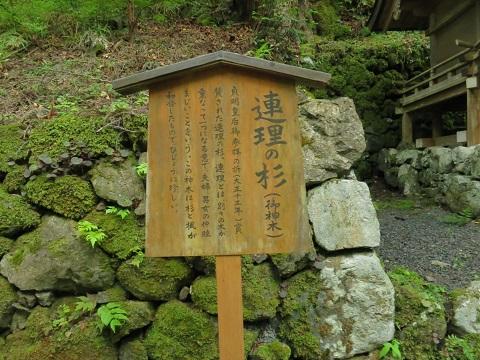 2014-05-26-7連理の杉-1-12%.jpg