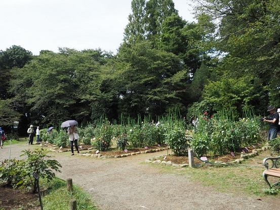 2017-9-15-25本園ダリア園-12%.jpg