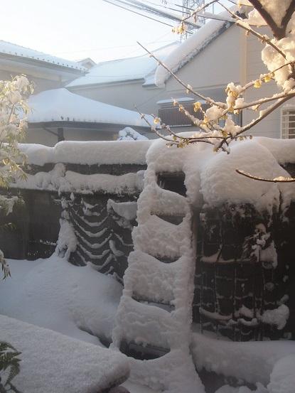 2018-1-23-3庭の雪-12%.jpg